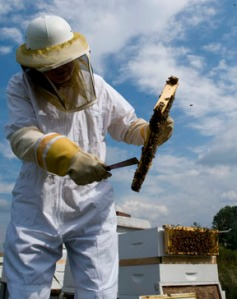 Inspecting a frame of bees under an East Tennessee sky