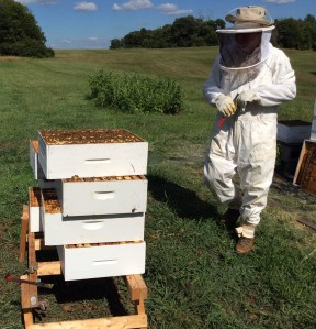 Starting from the bottom in reducing the hive means that you have to break apart the entire hive. That's a difficult task, but the benefits are worth it.