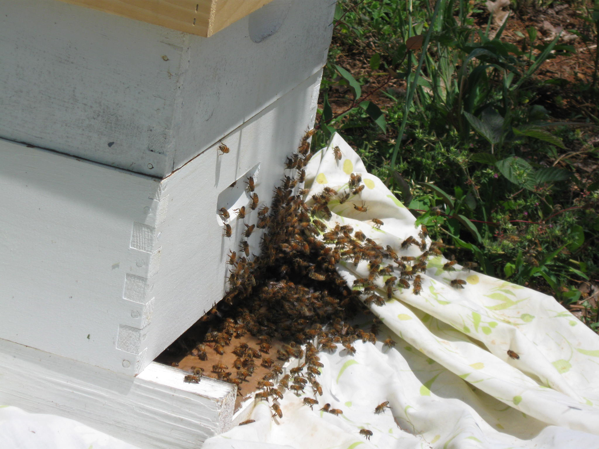 From where i sit essays on bees beekeeping and science