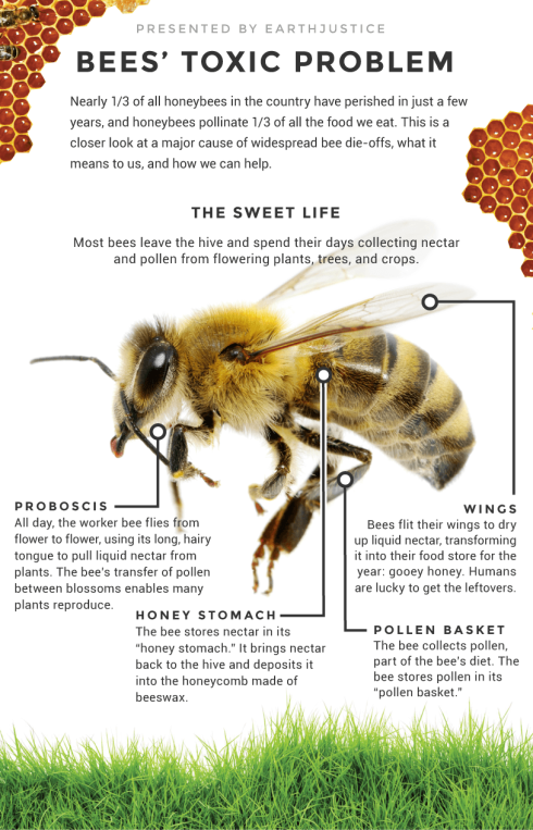 bees and pesticides | Blount County Beekeepers Association