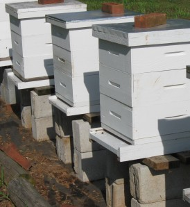 Beehives build with just one size of bee boxes.